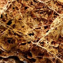 Maple Leaf Rock detail