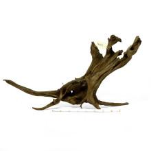 Driftwood XL (60-100cm)