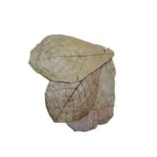 Dennerle Catappa Leaves