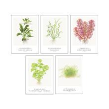 Tropica Art Cards - set Echinodorus