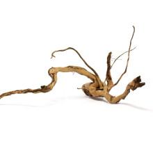 Azalea root