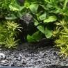Dennerle Plantahunter grind Baikal 3-8mm
