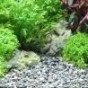 Dennerle Plantahunter grind River S 4-8mm