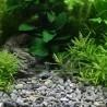Dennerle Plantahunter grind River L 8-12mm
