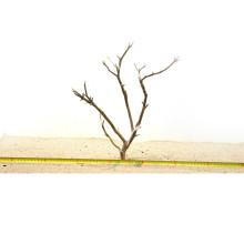 Manzanita hout S (30-40cm) - Manzanita Wood voor het aquarium