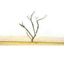 Manzanita wood-S (30-40cm) - Manzanita Wood for aquarium