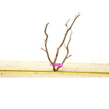 Manzanita hout M (40-50cm) - Manzanita Wood voor het aquarium