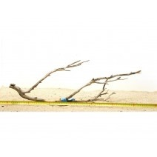Manzanita wood L (50-60cm) - Manzanita Wood for aquarium
