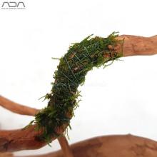 ADA moss cotton - javamos op hout binden
