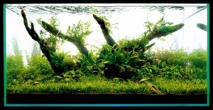 Aquascaping-stapvoorstap-17