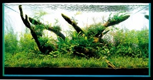 Aquascaping-stapvoorstap-18