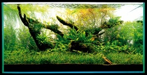 Aquascaping-stapvoorstap-19