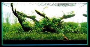 Aquascaping-stapvoorstap-20