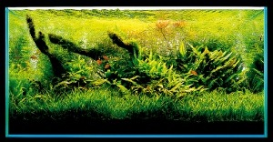 Aquascaping-stapvoorstap-21