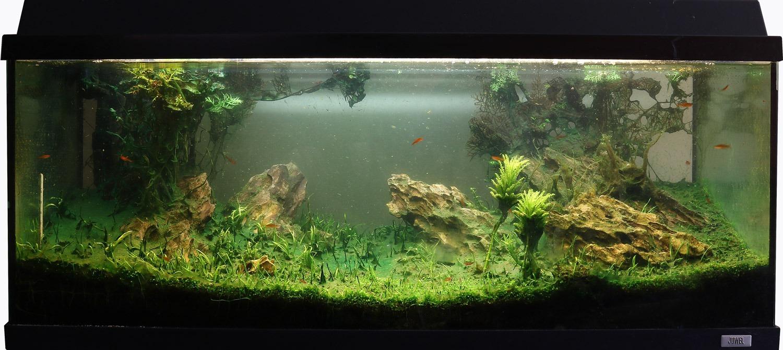 aquarium met blauwalg