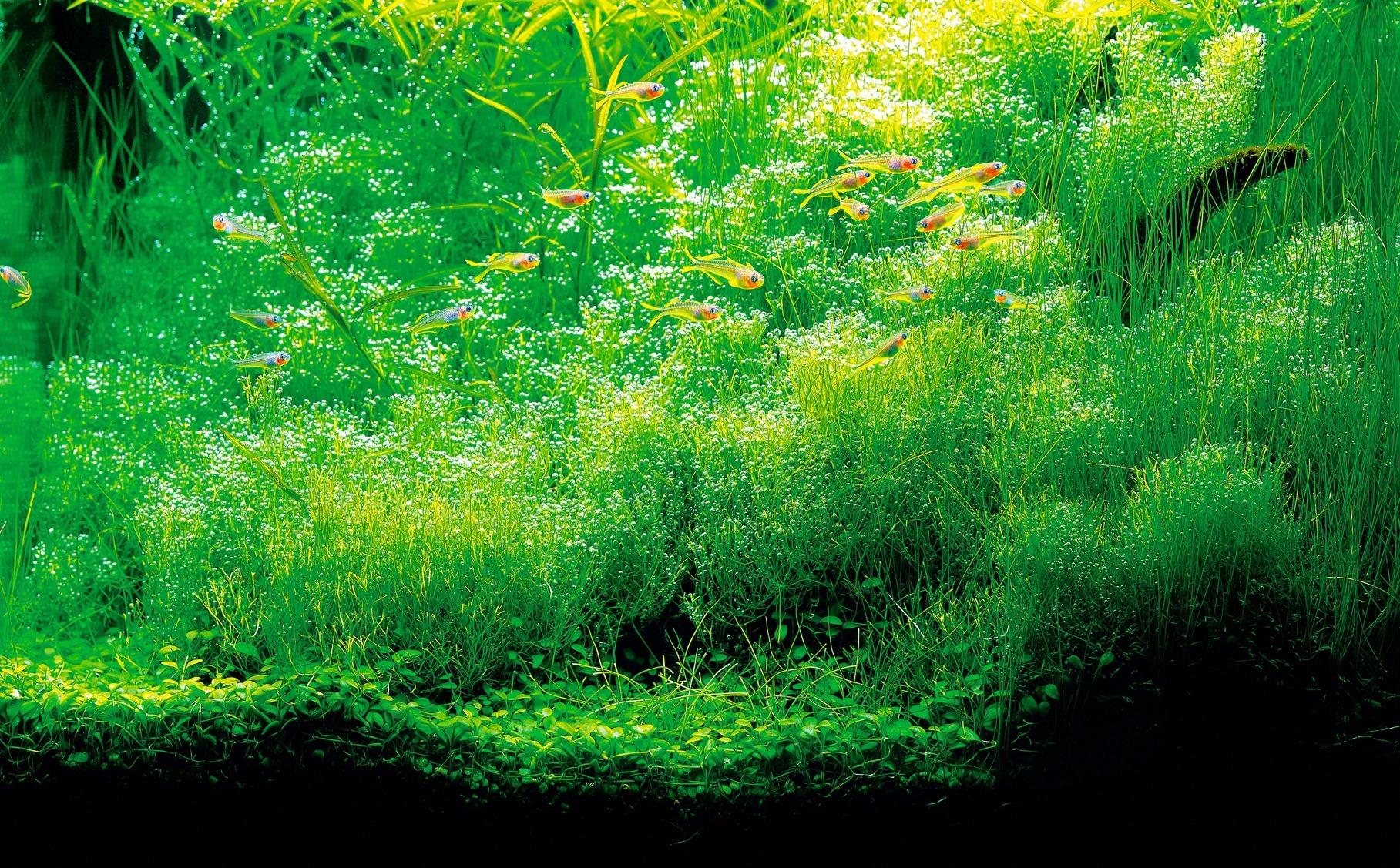 Plant food - Azaqua