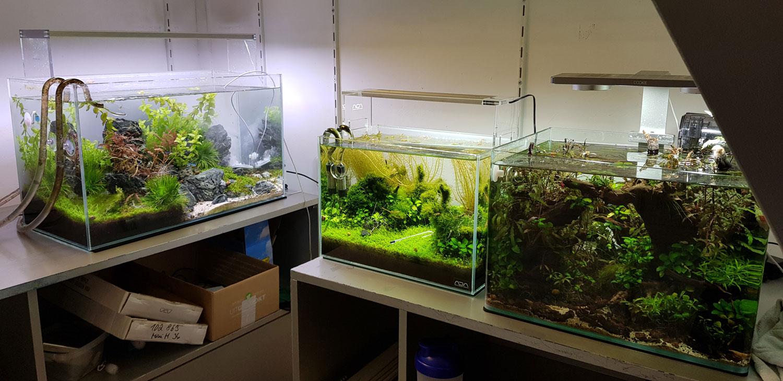 Ook de aquariums zijn verhuisd naar hun tijdelijke onderkomen.